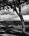 Pogled na Rožnik pri Ljubljani spomladi 1928.jpg