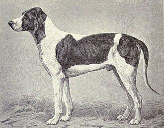 Billy (dog) - Poitou Hound 1915