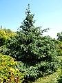 Poltava Botanical garden (113).jpg