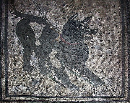 "A Roman mosaic inscribed with the Latin phrase cave canem (""beware of the dog""), from the House of the Tragic Poet in Pompeii, Italy, 2nd century BC Pompeii - Cave Canem (4786638740).jpg"