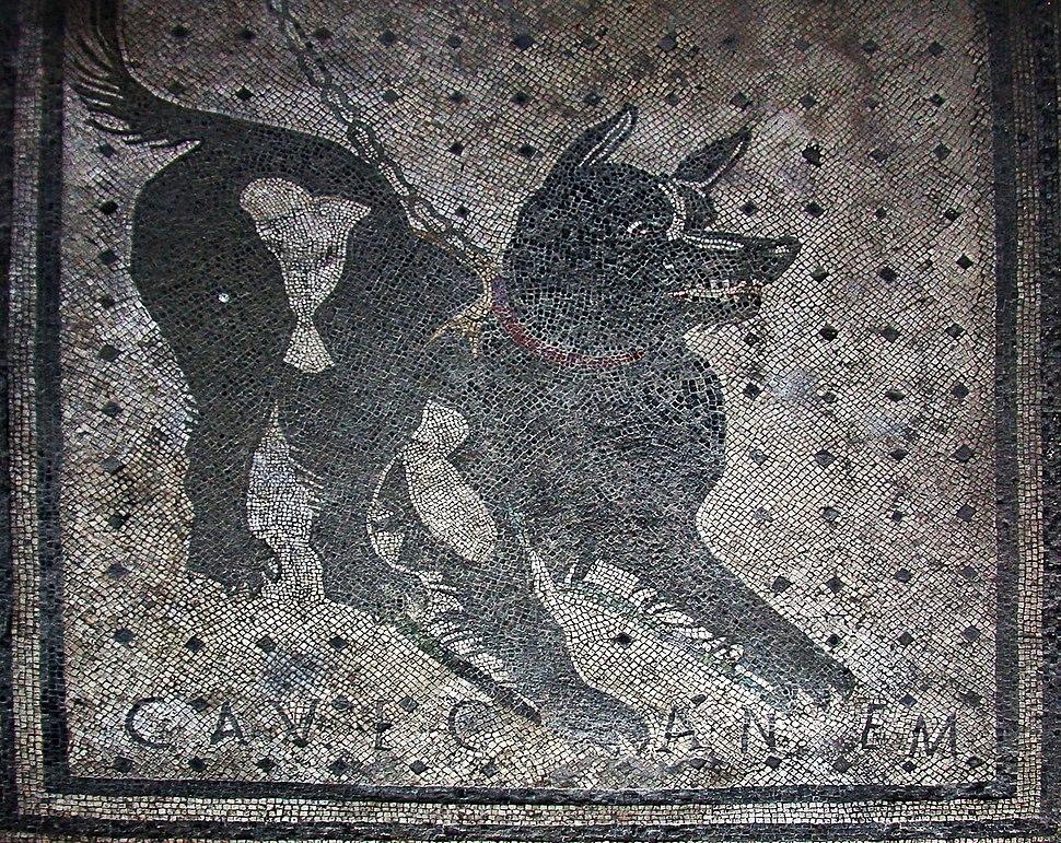Pompeii - Cave Canem (4786638740)