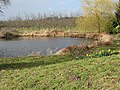 Pond and orchard as winter nears its end - geograph.org.uk - 723495.jpg