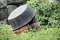 Pongo abelii at the Philadelphia Zoo 006.jpg