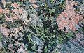 Porkkalanniemi, kallion pintaa 03.jpg
