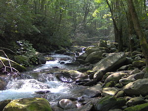 Greenbrier (Great Smoky Mountains) - Boulders litter the streambed of Porters Creek in Greenbrier
