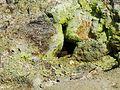 Pozzuoli, la solfatara (17863553158).jpg