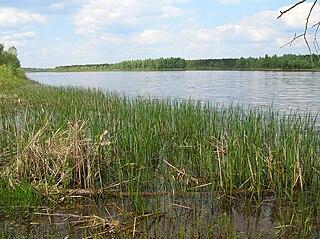Pinsk Marshes Natural region in Belarus and Ukraine