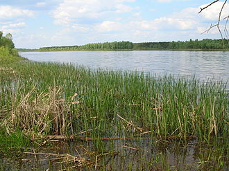 Pinsk Marshes - View of the marshy areas bounding the Pripyat River