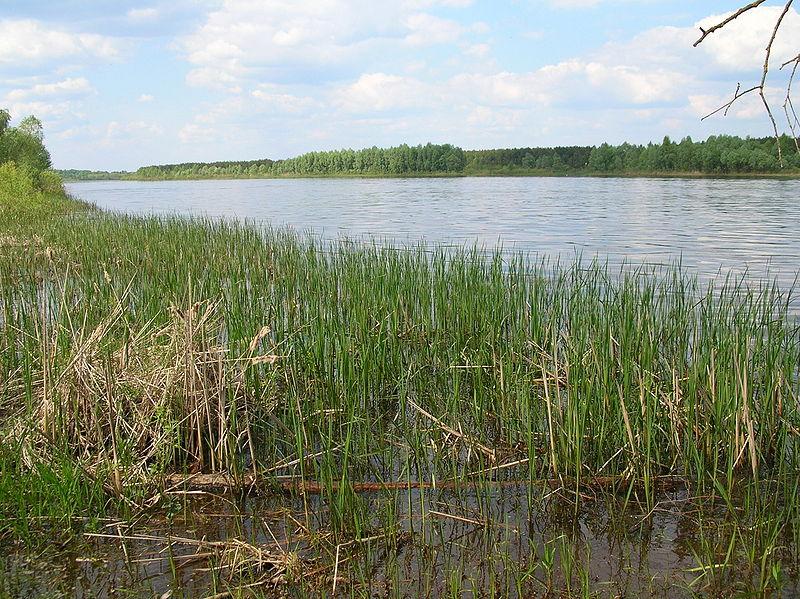 View of the marshy areas bounding the Pripyat River