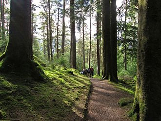 Argyll Forest Park - Benmore forest