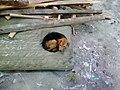 Puppy at musorke.jpg