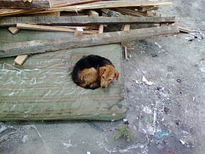 Poor puppy hiding in the old mattresses near d...