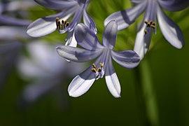 Purple flower closeup.jpg