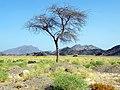 Qesm Marsa Alam, Red Sea Governorate, Egypt - panoramio (9).jpg