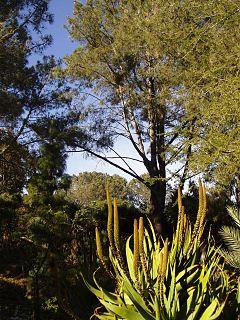 San Diego Botanic Garden non-profit organisation in the USA