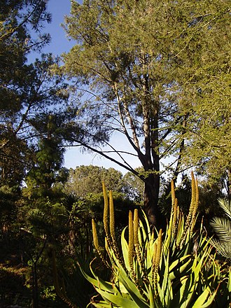 San Diego Botanic Garden - Image: Quail Botanical Gardens general view