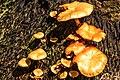 Quirigua ruinas-toadstools (6995988685).jpg