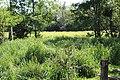 Réserve naturelle Marais Lavours Aignoz Ceyzérieu 15.jpg
