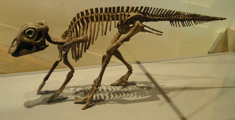File:ROM-MaiasaurBaby-May14-05.png