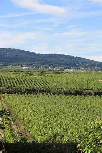 Oestrich-Winkel - Weingut H. T. Eser in Oestrich-Winkel