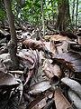 Rain forest 21.jpg