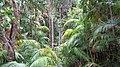 Rainforestation, Kuranda - panoramio (3).jpg
