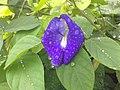 Rainy flower.jpg