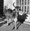 Rajasthan (6358517557).jpg