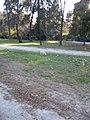 Real Parque del Buen Retiro (2807401768).jpg