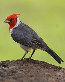 List of birds of Hawaii - Wikipedia, the free encyclopedia