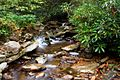 Red-run-waterfall-1 - West Virginia - ForestWander.jpg