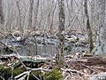 Red maple swamp (8435974372).jpg