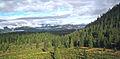 Reforestation Southern Oregon 2.jpg