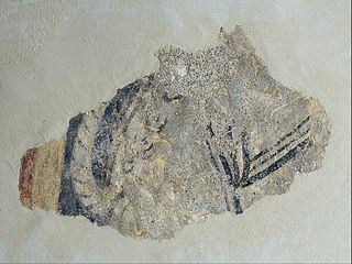 Remains of a quadruped from Boí