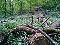 Riis Skov (dødt træ).jpg