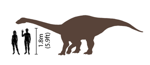 Riojasaurus - Riojasaurus, shown in comparison with humans.