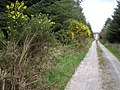 Road at Mountain Common - geograph.org.uk - 407635.jpg