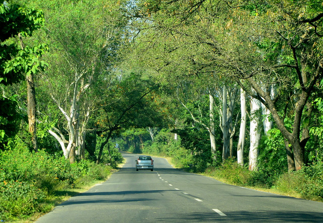 File Roads Of India Dehradun Uttarakhand Trees Along The