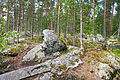 Rock in forest.jpg