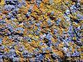 Rock with lichen.jpg