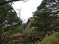 Rocky outcrop - geograph.org.uk - 1759203.jpg