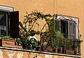 Rome (Italy), Windows -- 2013 -- 3492.jpg