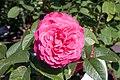 Rosa L.D. Braithwaite 0zz.jpg