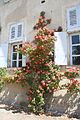 Roseraie jardins de La Croze.jpg