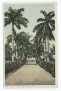 Royal Palms, Palm Beach, Fla (NYPL b12647398-75643).tiff