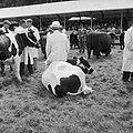 Royal Welsh Agricultural Show at Golden Grove, Carmarthenshire (7636805692).jpg