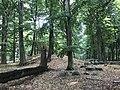 Rubkow Großsteingrab Kuhbergholz (3).jpg