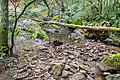 Ruisseau d'Audiernes 14.jpg