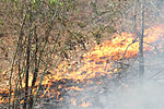 SCNG and SC Forestry Commission team up to fight fires 150410-Z-WS267-111.jpg