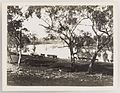 SLNSW 919854 Series 02 Cattle ca 19211924.jpg